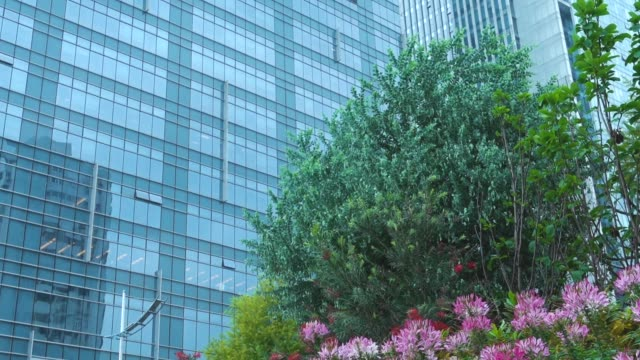 vídeos de stock e filmes b-roll de tilt down of urban gardening - oscilar