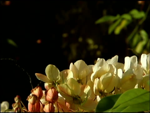 tilt down on tropical flowers - flowering plant stock videos & royalty-free footage