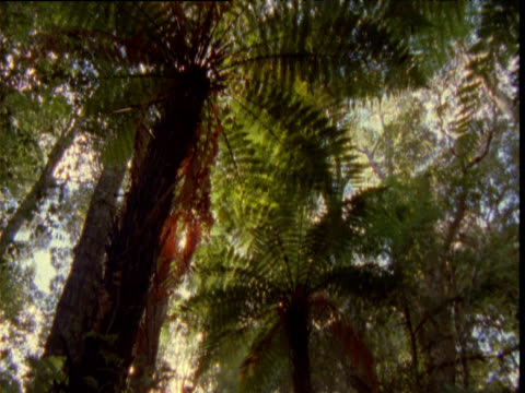 tilt down over tree ferns in forest, new zealand - fern stock videos & royalty-free footage