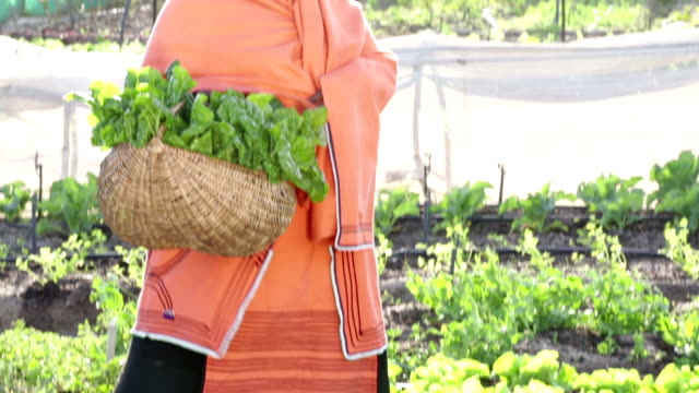 Tilt down portrait African Organic Farmer Woman