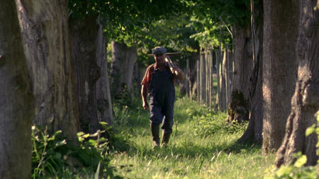 vidéos et rushes de tilt down senior man carrying tools walking through grove of trees towards camera to close up / normandy, france - scène rurale