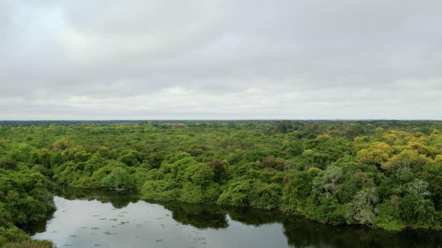 vídeos de stock, filmes e b-roll de tilt down shot from the forest canopy to the rebel lake - horizon