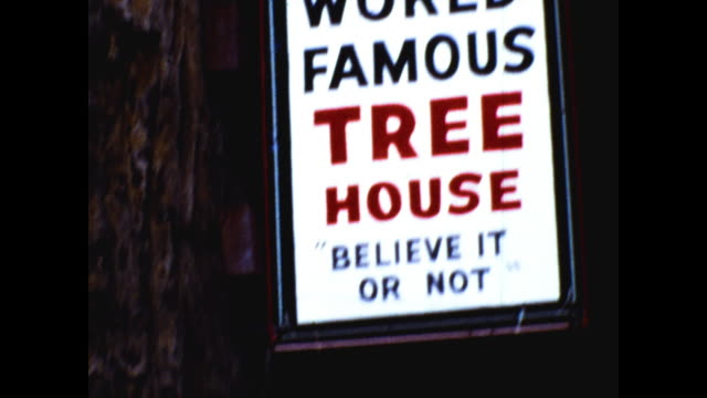 "tilt down shot of very tall and big tree, sign at the bottom ""world famous tree house believe it or not""; small tree house at the bottom of the tree - sequoia stock videos & royalty-free footage"