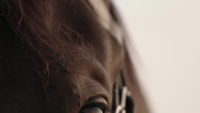 vídeos de stock, filmes e b-roll de tilt down shot of woman stroking horse - cavalo família do cavalo