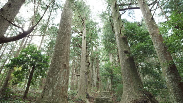 tilt down, stone trail in kumano kodo - satoyama scenery stock videos and b-roll footage