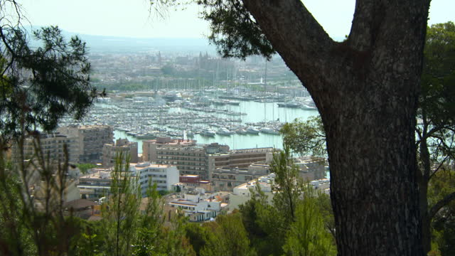 tilt down to a distant harbor city framed by lush green pine trees on a bright sunny day, with water and nearby port buildings - mallorca, spain - anchored stock videos & royalty-free footage