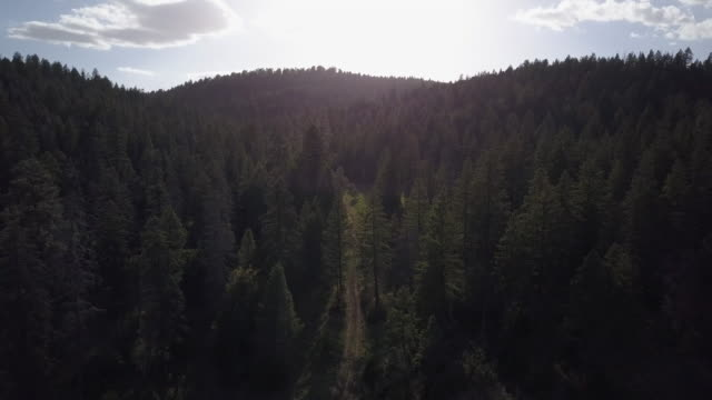 vidéos et rushes de tilt down to wooded path in forest, aerial - réserve amériendienne