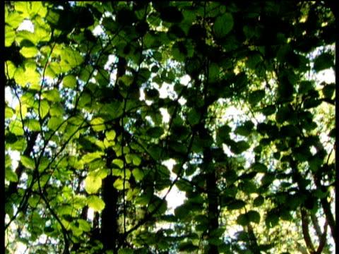 stockvideo's en b-roll-footage met tilt down trees in forest - plant attribute