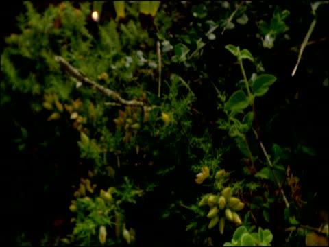 vídeos de stock, filmes e b-roll de tilt down vegetation to green beetles on white flower, parque natural los alcornocales (cadiz y malaga), andalucia, spain - parque green