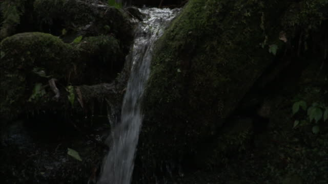 tilt down waterfall in forest, chopta, india available in hd. - flowing water stock videos & royalty-free footage