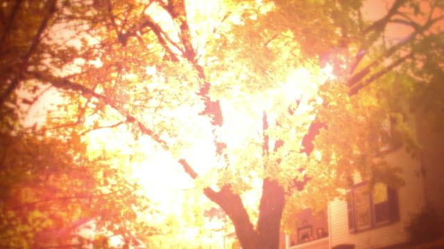 backlit tilt down wide shot from sun shining through branches of tree in autumn to house + 1920s cars (model t?) - 1925 stock videos & royalty-free footage