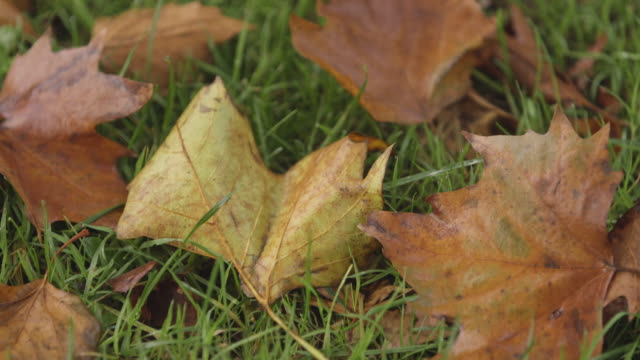 tilt onto autumnal leaves on grass - the end stock videos & royalty-free footage
