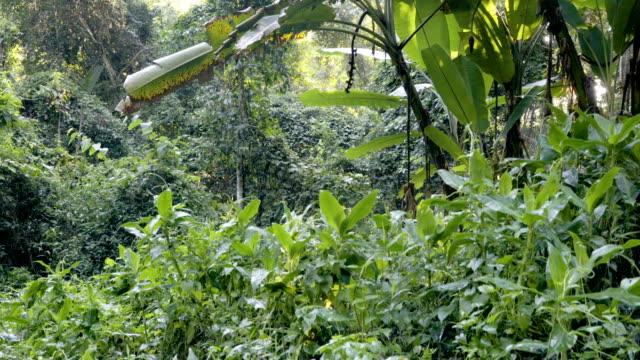 Tilt sköt 4K, regnskogen runt Mon Tha än vattenfall.