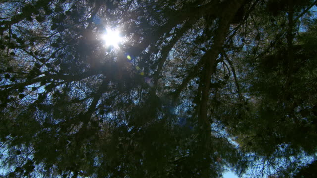 tilt: shot of the blue sky through a leafy canopy and the coastline of nice - 夏休み点の映像素材/bロール