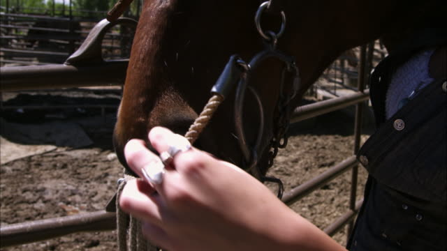 tilt slow motion shot of a woman adjusting a bridle. - bridle stock videos & royalty-free footage