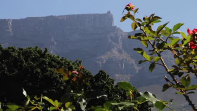 vídeos y material grabado en eventos de stock de tilt, table top mountain - una rosa