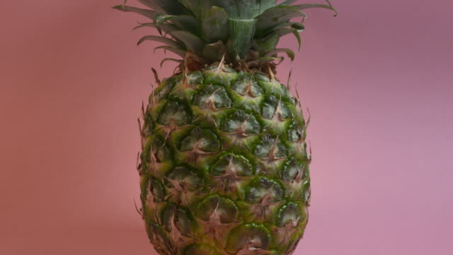 tilt up a pineapple crowned with splendiferous leaves against a plain pink background. - appuntito video stock e b–roll