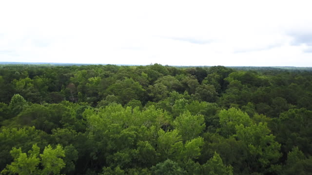 Tilt up aerial, lush woodlands of Georgia