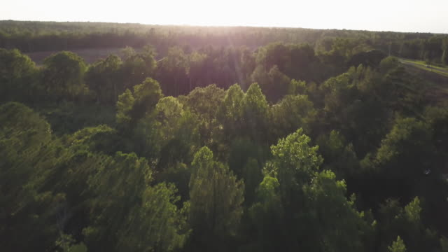 Tilt up aerial, sunshine over woodland