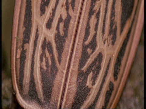 vídeos y material grabado en eventos de stock de cu tilt up along body of beetle, amazon - patrones de colores