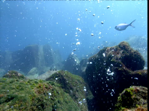tilt up as bubbles rise from seabed, new zealand - seabed stock videos & royalty-free footage
