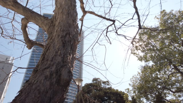 4k tilt up . deciduous tree and cityscape office - deciduous tree stock videos & royalty-free footage