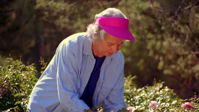 ms tilt up dolly shot senior woman cutting flower in garden + smelling it with pleased expression - trädgårdshandske bildbanksvideor och videomaterial från bakom kulisserna