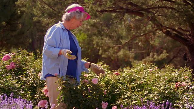 tilt up dolly shot senior woman in visor working + talking in garden / cutting + smelling flowers - trädgårdshandske bildbanksvideor och videomaterial från bakom kulisserna