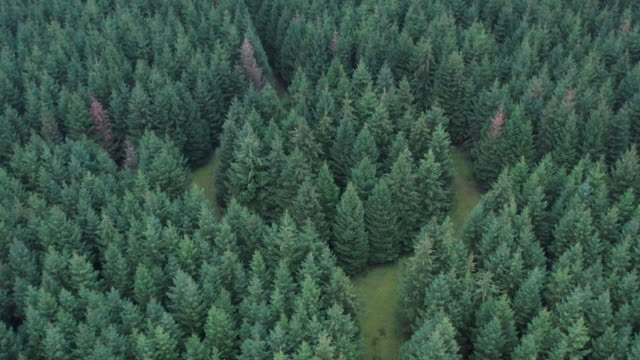tilt up drone shot flying backwards from an unusual forest, netherlands - spirituality stock videos & royalty-free footage