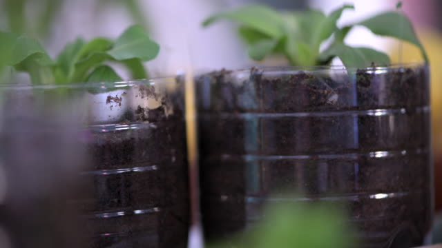 tilt up from celery growing to leafy vegetables planted in plastic bottles - celery stock videos & royalty-free footage