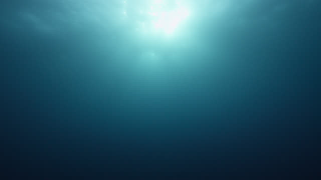 tilt up from depths to sunlight at ocean surface, azores - underwater stock videos & royalty-free footage