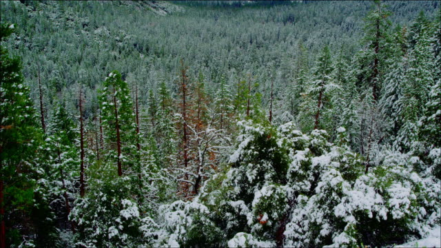 vídeos de stock, filmes e b-roll de tilt up from forest to discover magnificent view of yosemite valley in winter - véu