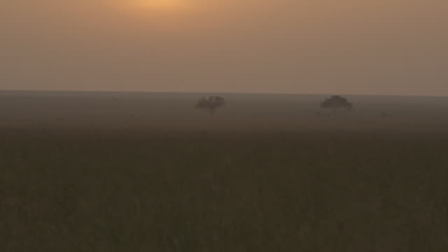 Tilt up from grass onto the sun rising over the savannah in Tanzania.