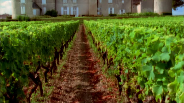 Tilt up from path through vineyard to view of chateau at Chateau d'Yquem with clouds drifting overhead / Graves, Bordeaux, France