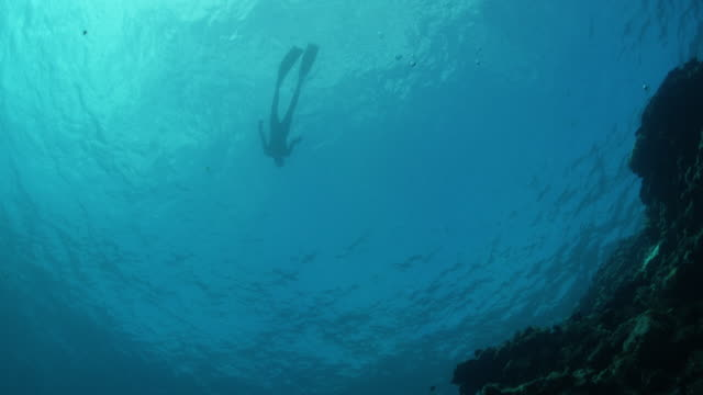 tilt up from reef to scuba diver floating on surface, wide shot - スキューバダイビング点の映像素材/bロール