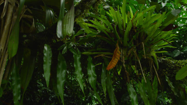 Tilt up from river to epiphytic plants on branch.