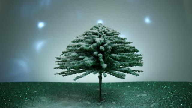 inclina verso l'alto un pino in miniatura isolato spolverato di neve - pino video stock e b–roll