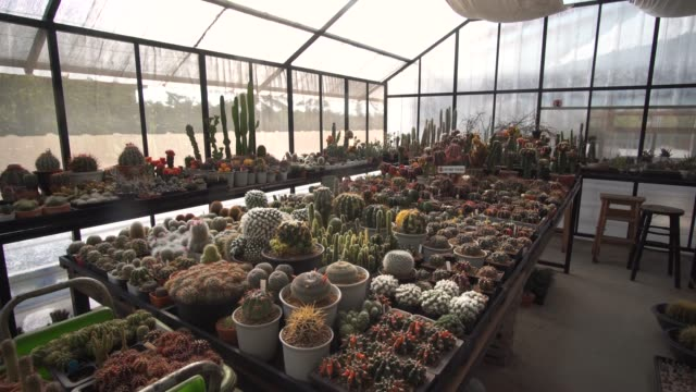 tilt up of collection of succulent plant - pendant light stock videos & royalty-free footage
