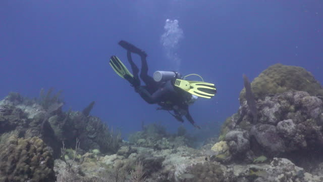 tilt up of scuba divers swimming through coral at looe key coral reef in the florida keys national marine sanctuary. - ゴーゴニアンコーラル点の映像素材/bロール