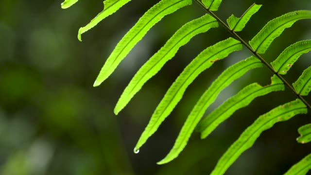 tilt up on backlit fern frond - frond stock videos & royalty-free footage