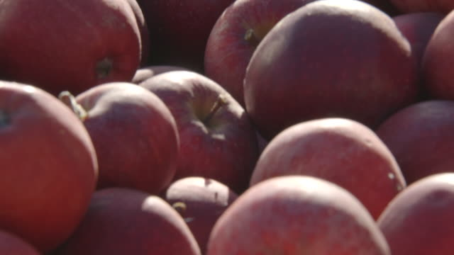 Tilt up onto a close-up of Royal Gala apples in a crate in the UK.