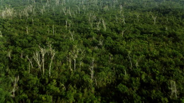 vidéos et rushes de tilt up over forest landscape in mexico - mexique