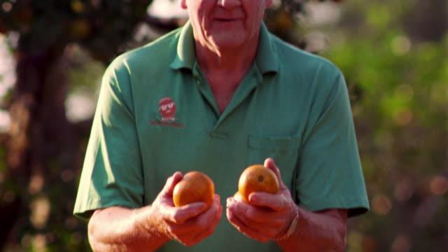 MS tilt up PORTRAIT senior man picking up two oranges out of basket in orange grove