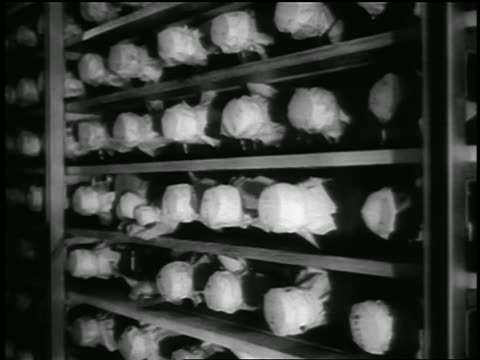 b/w 1955 tilt up rack of jars sealed with pieces of cloth / newsreel - polio stock videos & royalty-free footage
