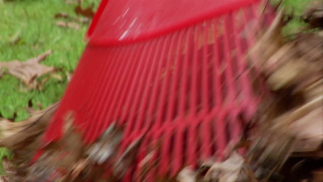 Tilt up rake as woman rakes leaves / woman pausing to smile at camera / tilt back down rake as woman resumes raking