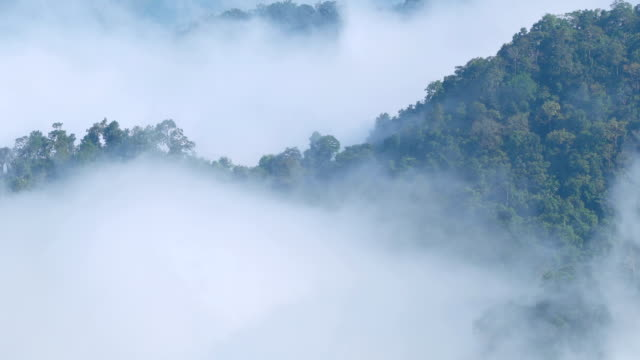 tilt up real time mist moving over rainforest. - digital composite stock videos & royalty-free footage
