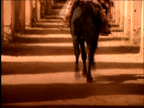 tilt up rear view middle eastern man riding horse galloping in corridor / morocco - galoppieren stock-videos und b-roll-filmmaterial