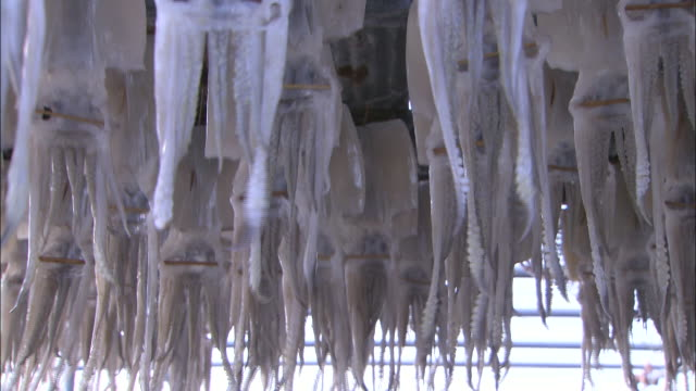 tilt up sagittated calamary hanging from lines under corrugated shelter - 水産業点の映像素材/bロール