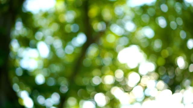 Kippen Sie nach oben Schuss von Boden an Himmel der Natur mit Rasen, Baum, Urlaub und Himmel am Morgen
