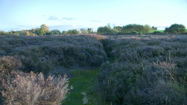 vidéos et rushes de tilt up shot from the undergrowth of the bog to a landscape - arbre à feuilles caduques